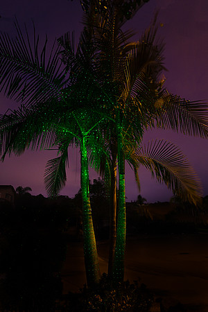 Green-SparkleMagic-Illuminator-Laser-Light-below-King-Palm-Tree