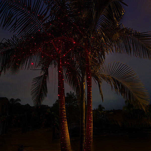 sparkle-magic-illuminator-red-laser-lights-palm-tree